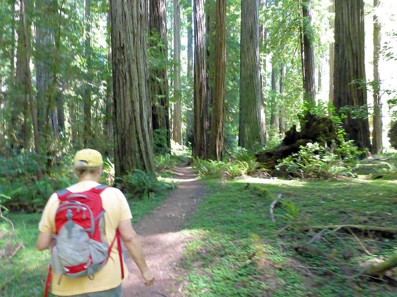 Redwoods , Founders Grove hike