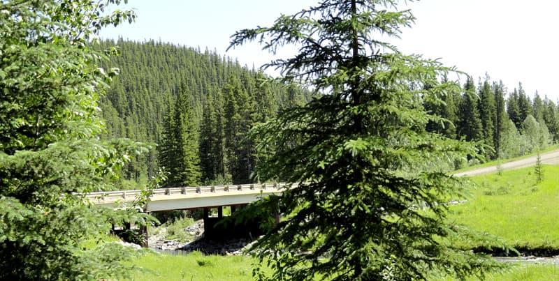 Road into Brown Creek Provincial Recreation Area