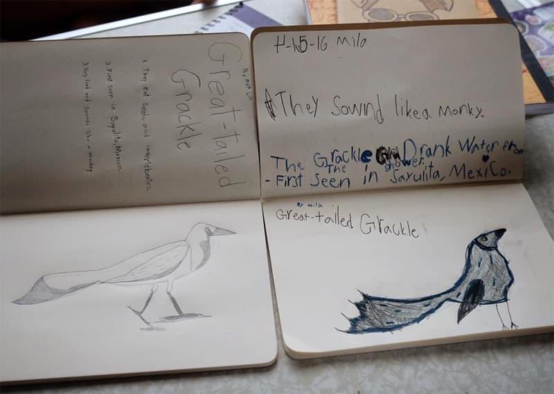 Roadschool, learning about birds