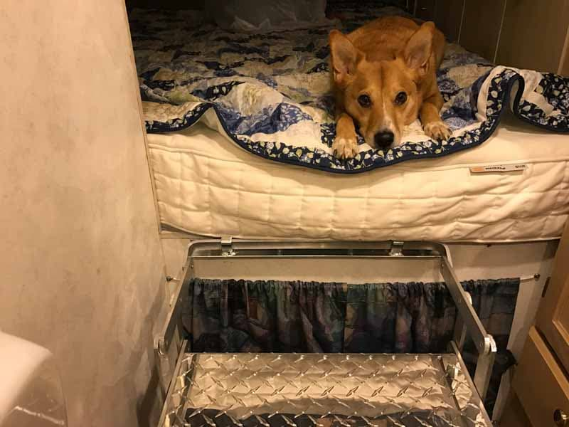 Dog having trouble getting out of bed