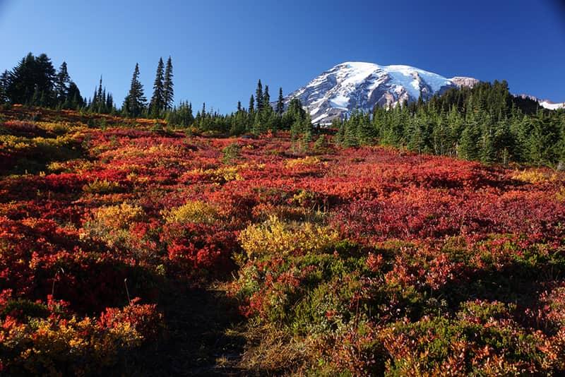 Washington Mt Rainier