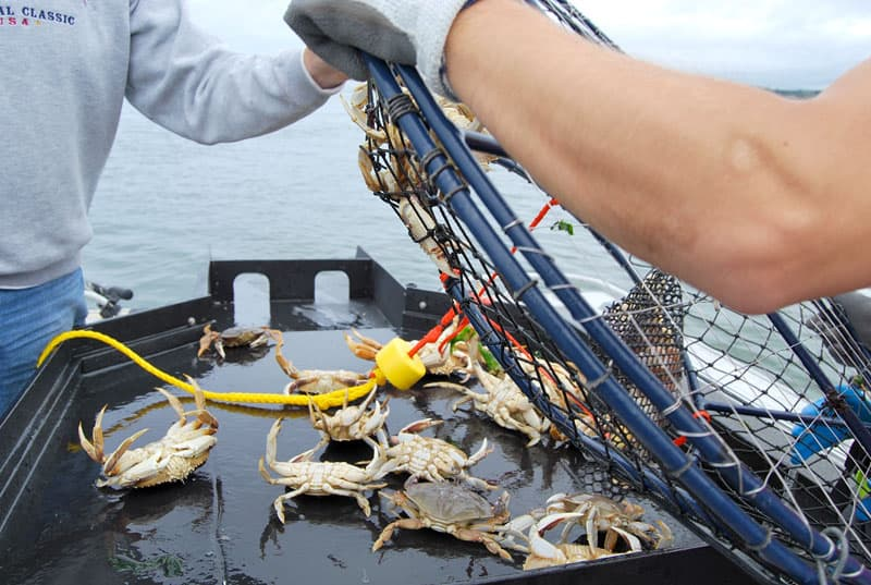 Sorting table on boat for crabs