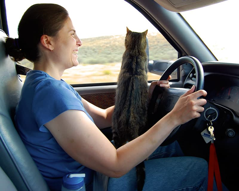 Harley Cat Drives The Truck
