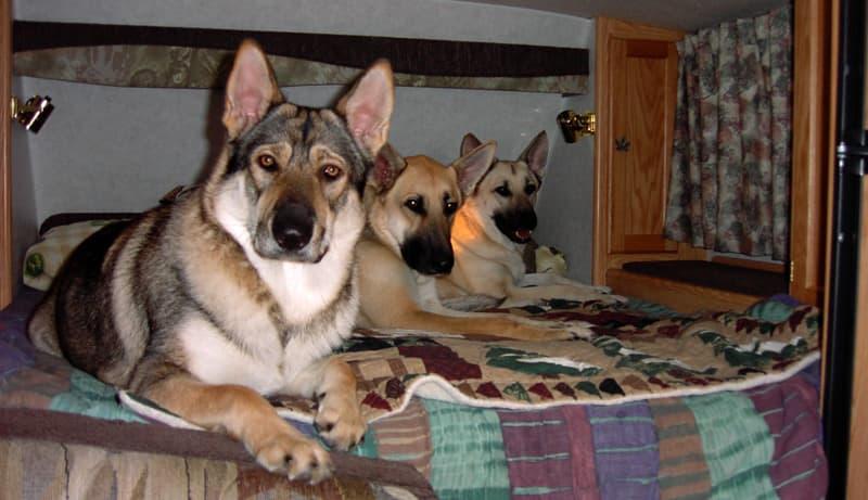 Three Dog Kids Joe Ebert