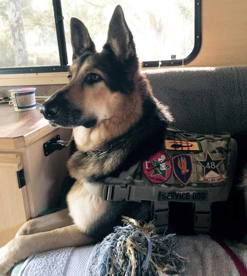 Dog in his truck camper