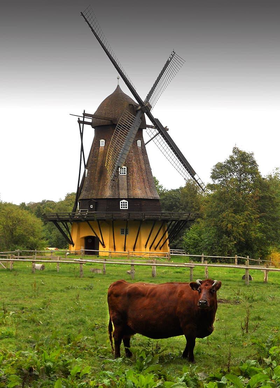 Cow Folk Village