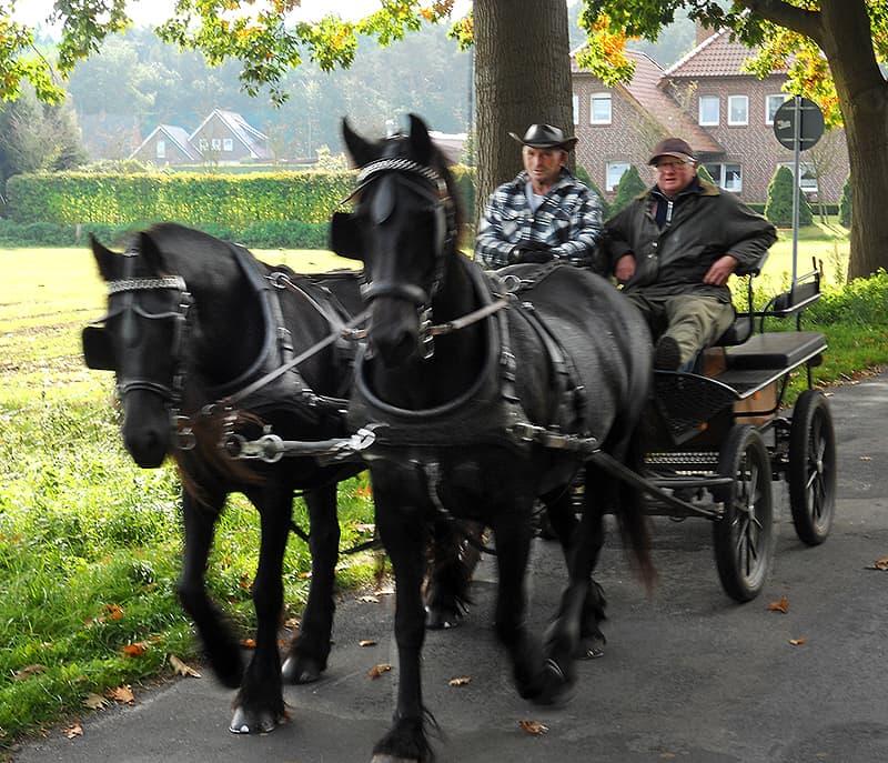 Esterwegen horses Germany