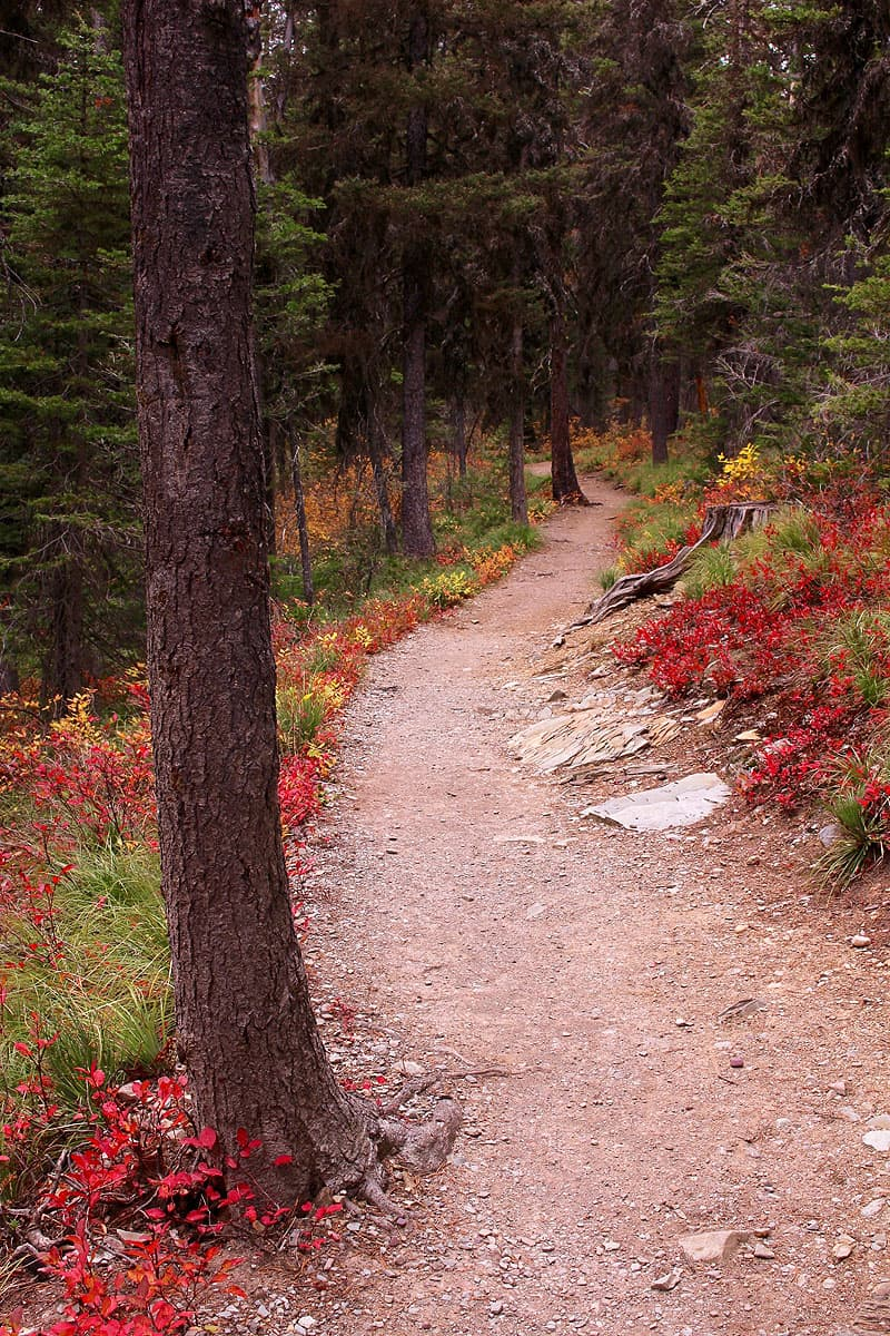 Two Medicine Trail, Glacier National Park