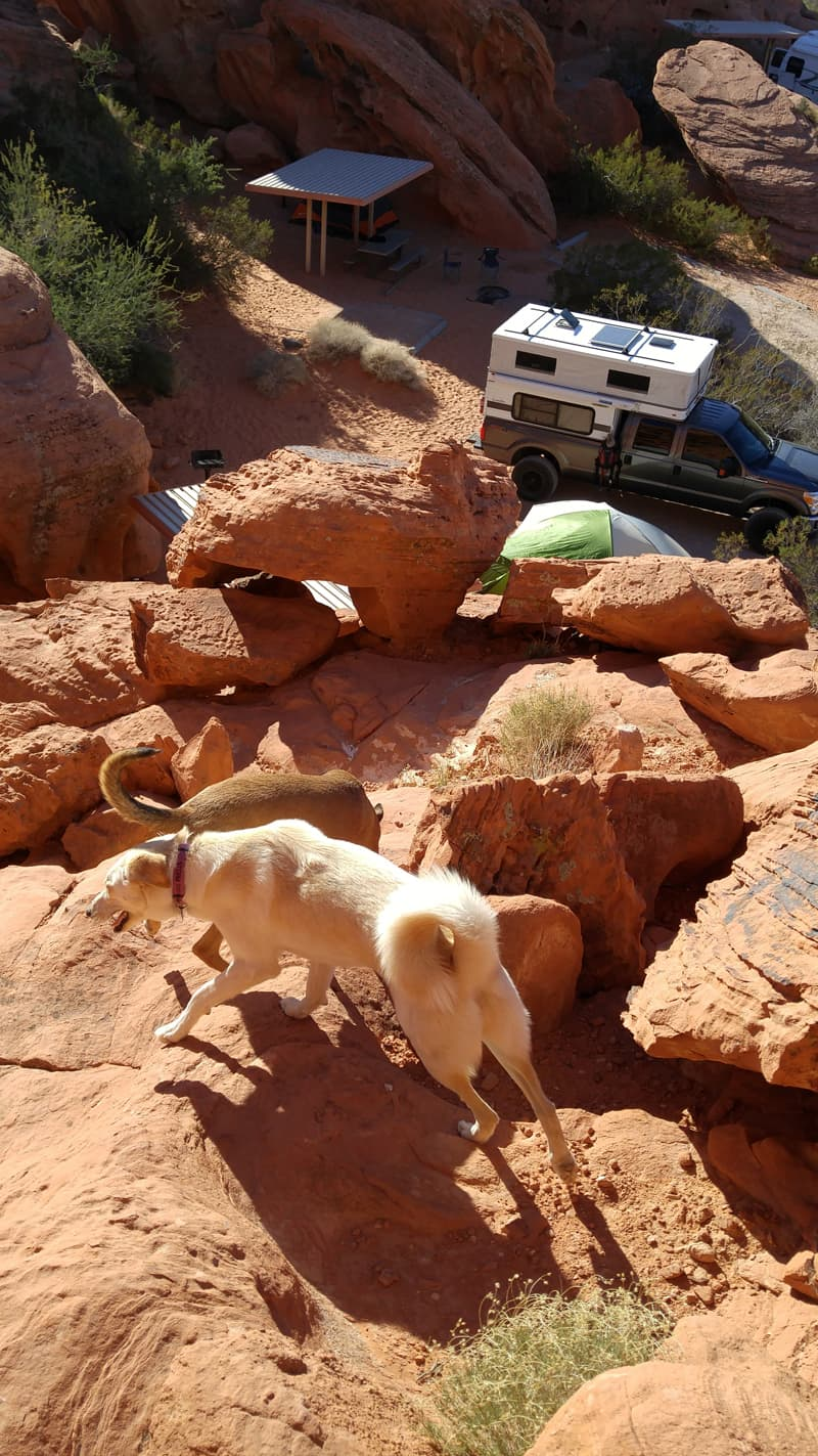 Valley Of Fire With Dogs