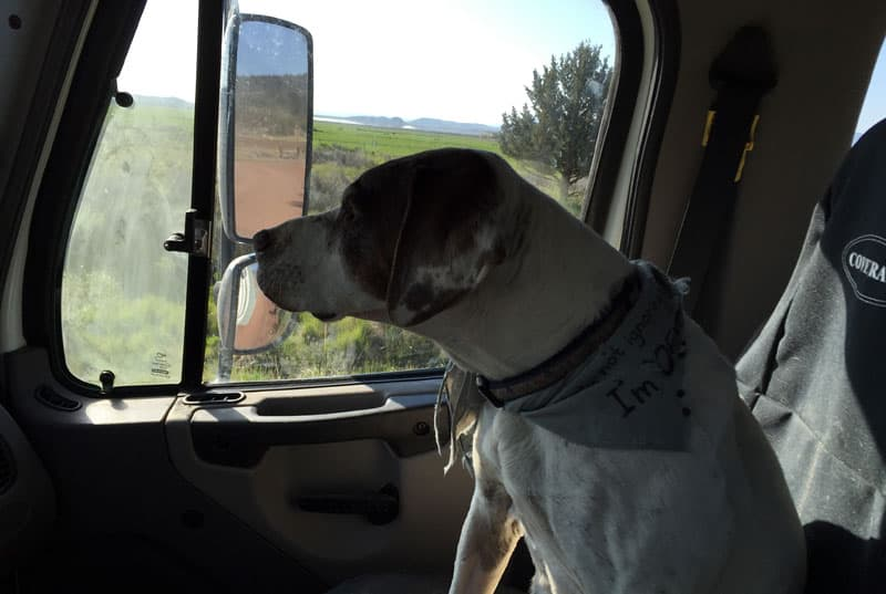 Parker riding in Freighliner truck