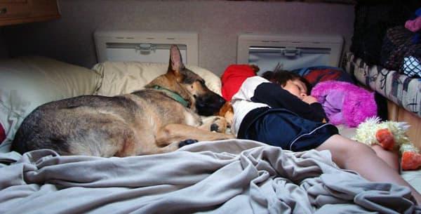 Guinness and grandson sleeping in Northstar overcab