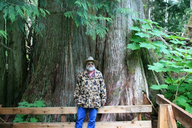 Alaska-Cannonball-Big-Cedar-Tree