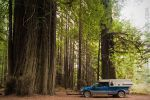 Cross-country-6081-sequoia