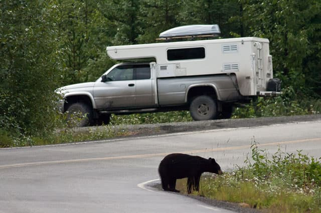 Bear-in-British-Columbia-near-Hallmark Cuchara