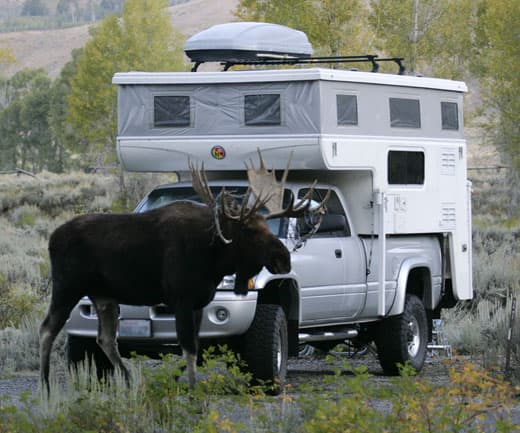 Moose-in-the-Tetons
