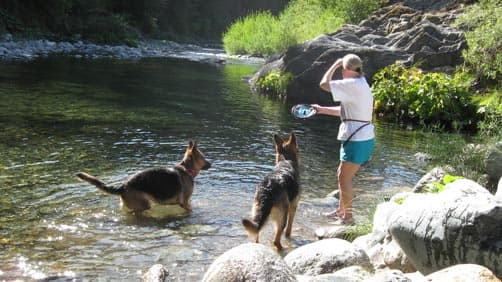 German Shepherds enjoying the water and camping
