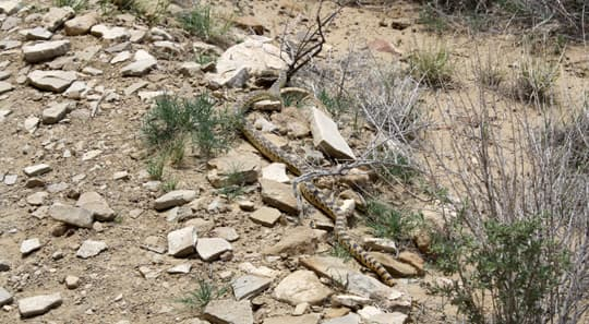 travels-Snake-Chaco-Canyon