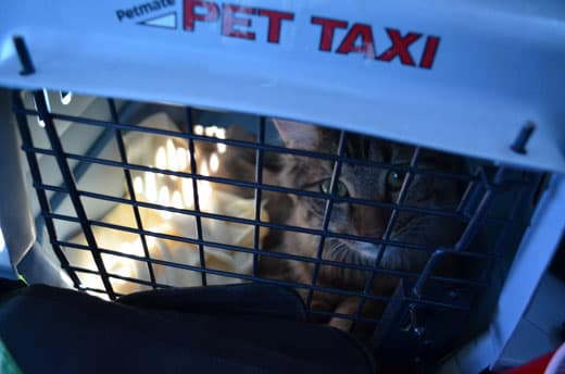 Texas-Rally-Ride-To-Airport-Cat